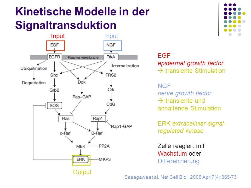 Kinetische Modelle in der Signaltransduktion