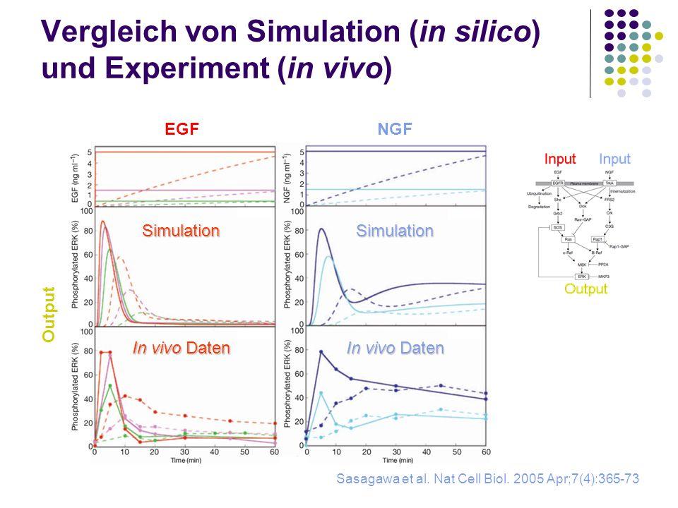 Vergleich von Simulation (in silico) und Experiment (in vivo)