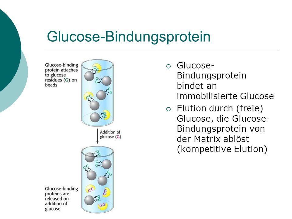 Glucose-Bindungsprotein
