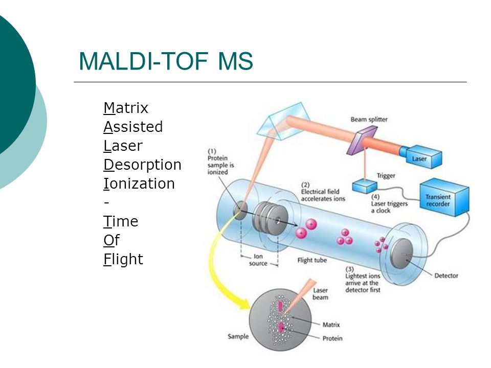 MALDI-TOF MS Matrix Assisted Laser Desorption Ionization - Time Of