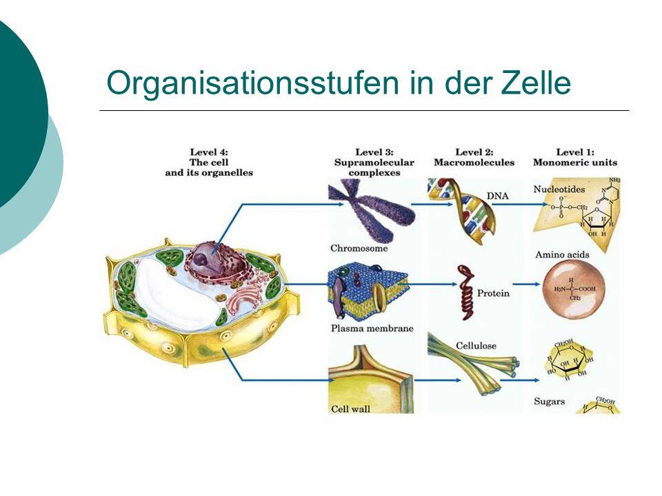 Organisationsstufen in der Zelle
