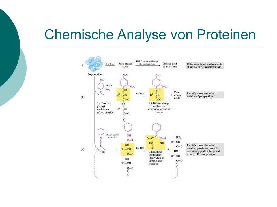 Chemische Analyse von Proteinen