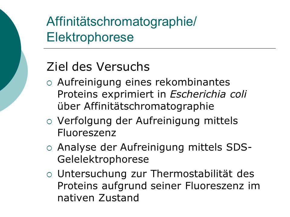 Affinitätschromatographie/ Elektrophorese