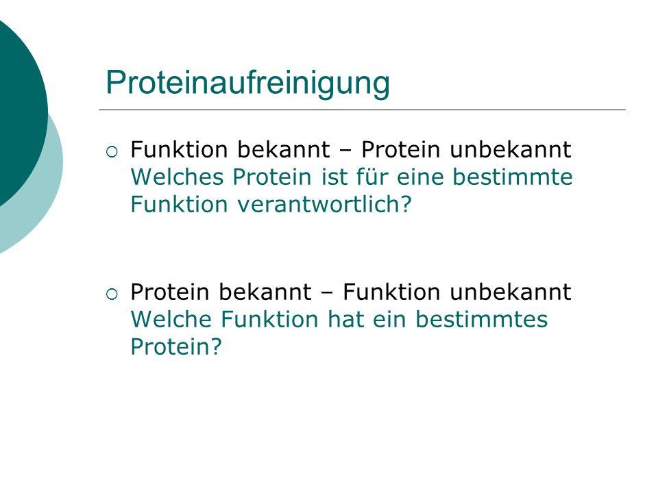 Proteinaufreinigung Funktion bekannt – Protein unbekannt Welches Protein ist für eine bestimmte Funktion verantwortlich