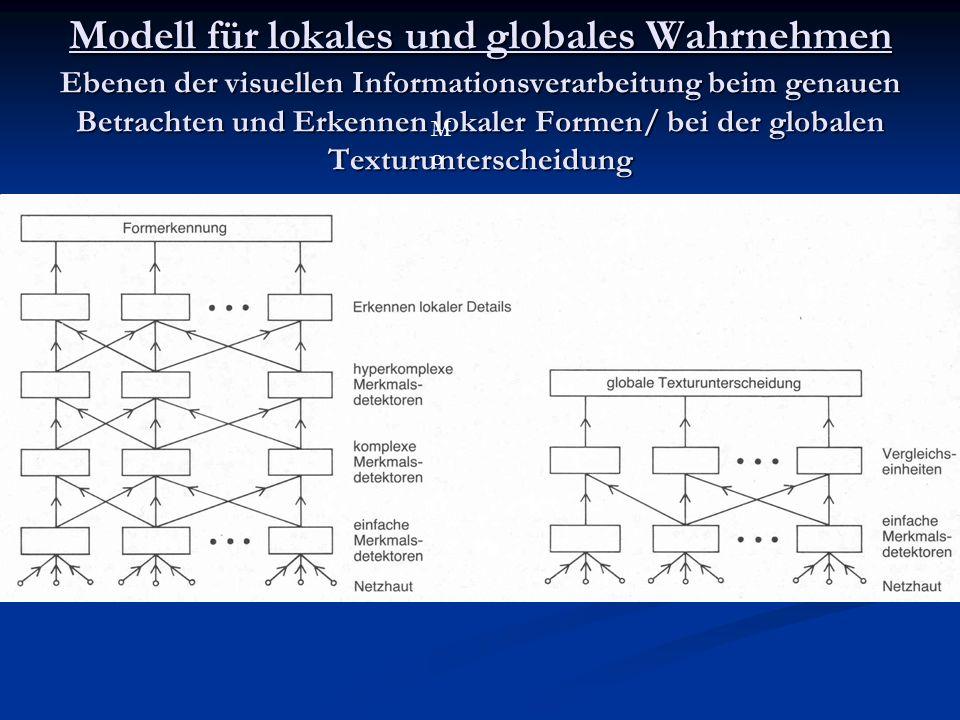 Modell für lokales und globales Wahrnehmen Ebenen der visuellen Informationsverarbeitung beim genauen Betrachten und Erkennen lokaler Formen/ bei der globalen Texturunterscheidung