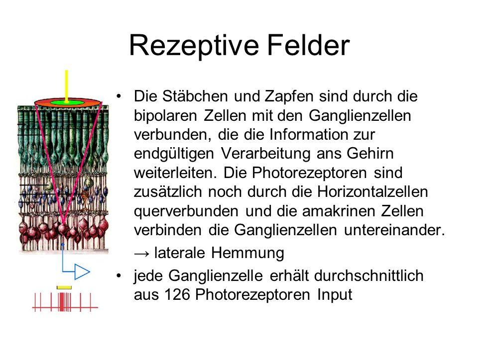 Rezeptive Felder