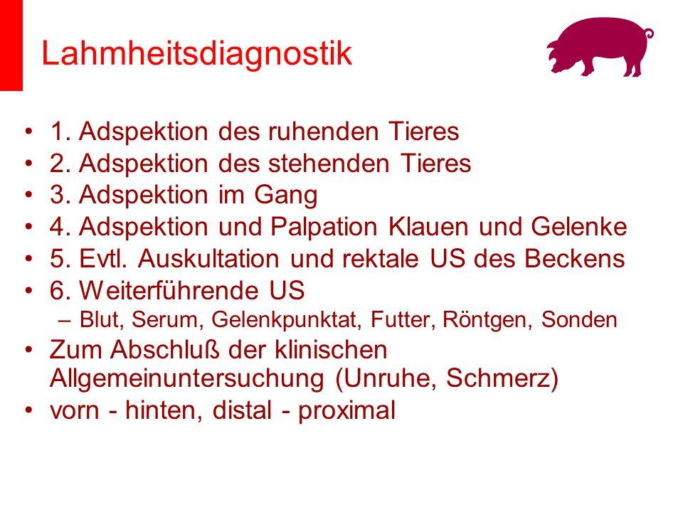 Lahmheitsdiagnostik 1. Adspektion des ruhenden Tieres