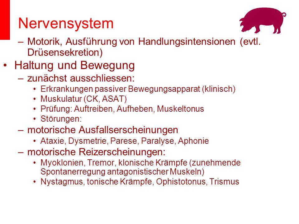 Nervensystem Haltung und Bewegung