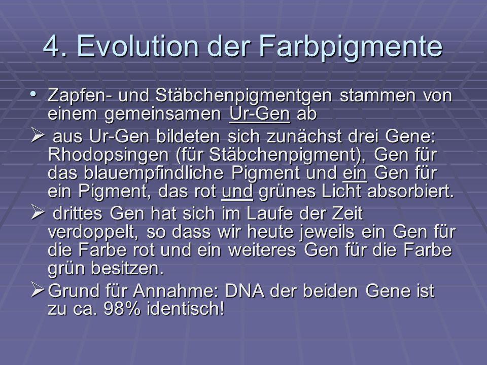 4. Evolution der Farbpigmente