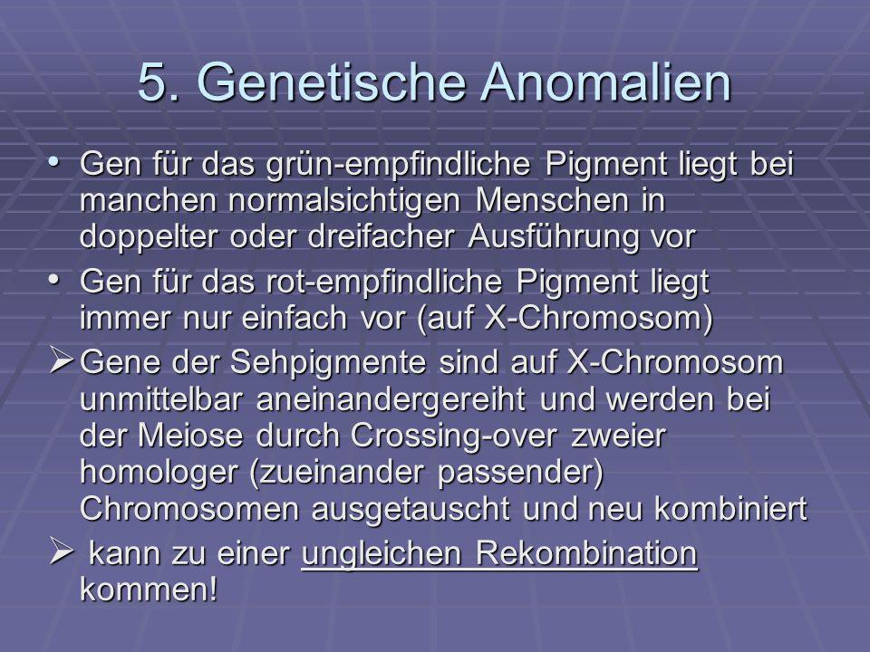 5. Genetische Anomalien Gen für das grün-empfindliche Pigment liegt bei manchen normalsichtigen Menschen in doppelter oder dreifacher Ausführung vor.