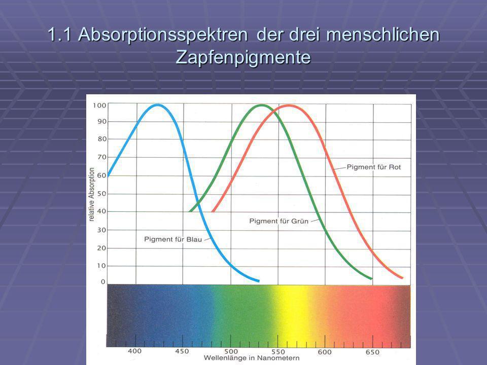 1.1 Absorptionsspektren der drei menschlichen Zapfenpigmente