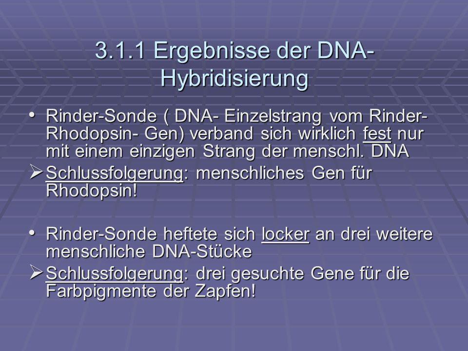 3.1.1 Ergebnisse der DNA- Hybridisierung