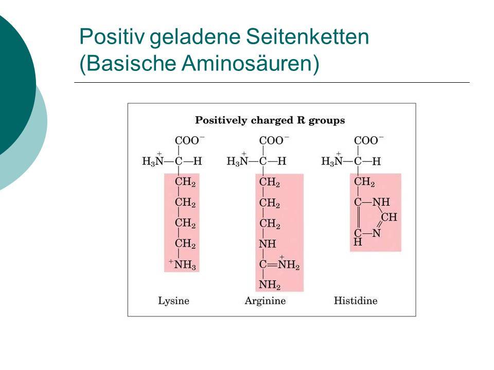 Positiv geladene Seitenketten (Basische Aminosäuren)