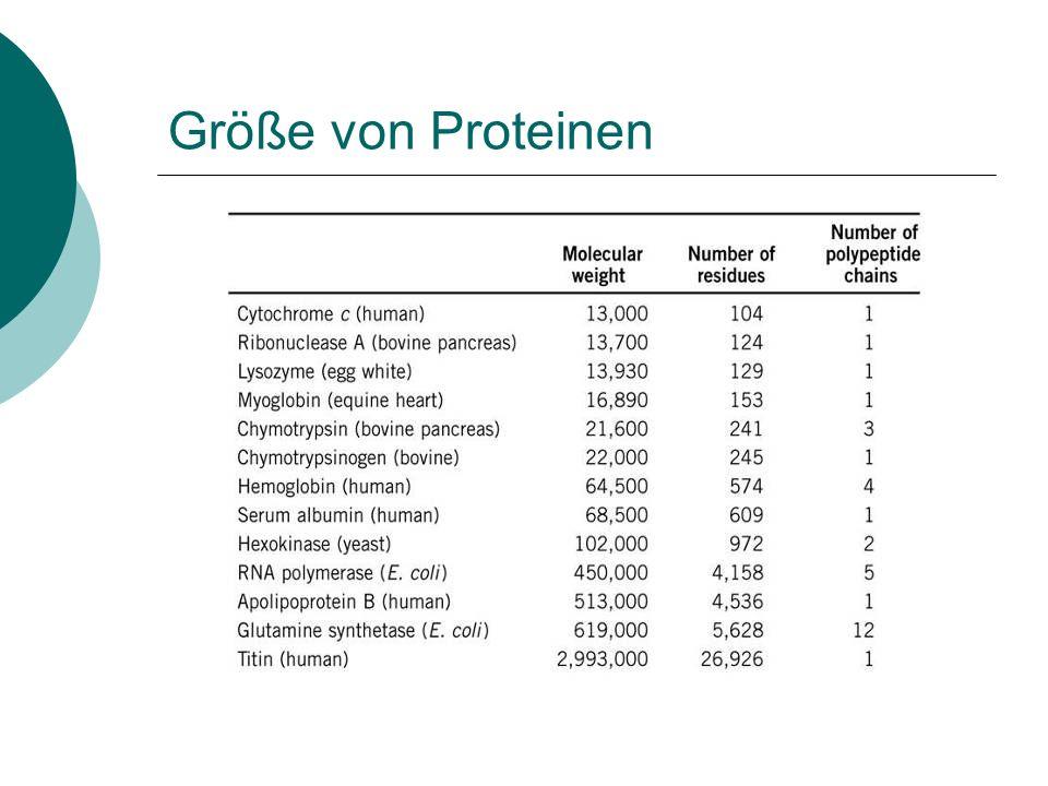 Größe von Proteinen