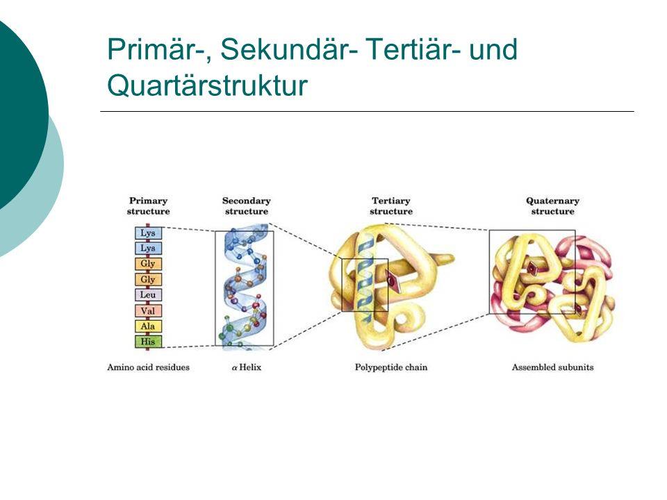 Primär-, Sekundär- Tertiär- und Quartärstruktur