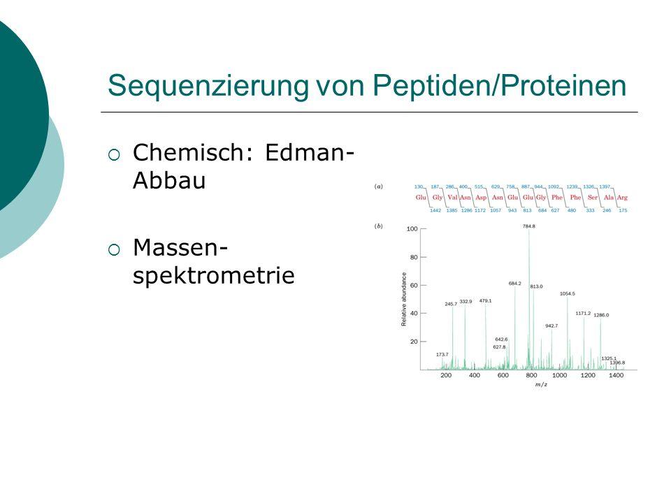 Sequenzierung von Peptiden/Proteinen