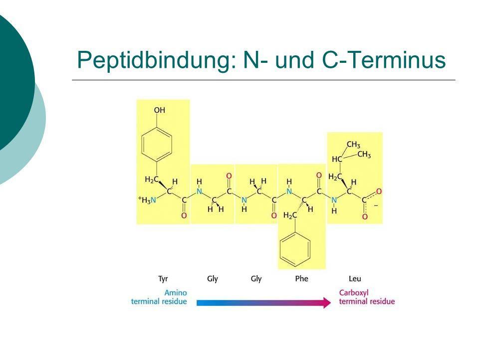Peptidbindung: N- und C-Terminus