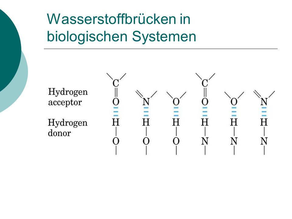Wasserstoffbrücken in biologischen Systemen