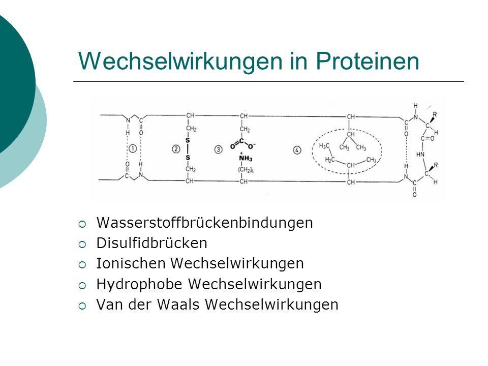 Wechselwirkungen in Proteinen