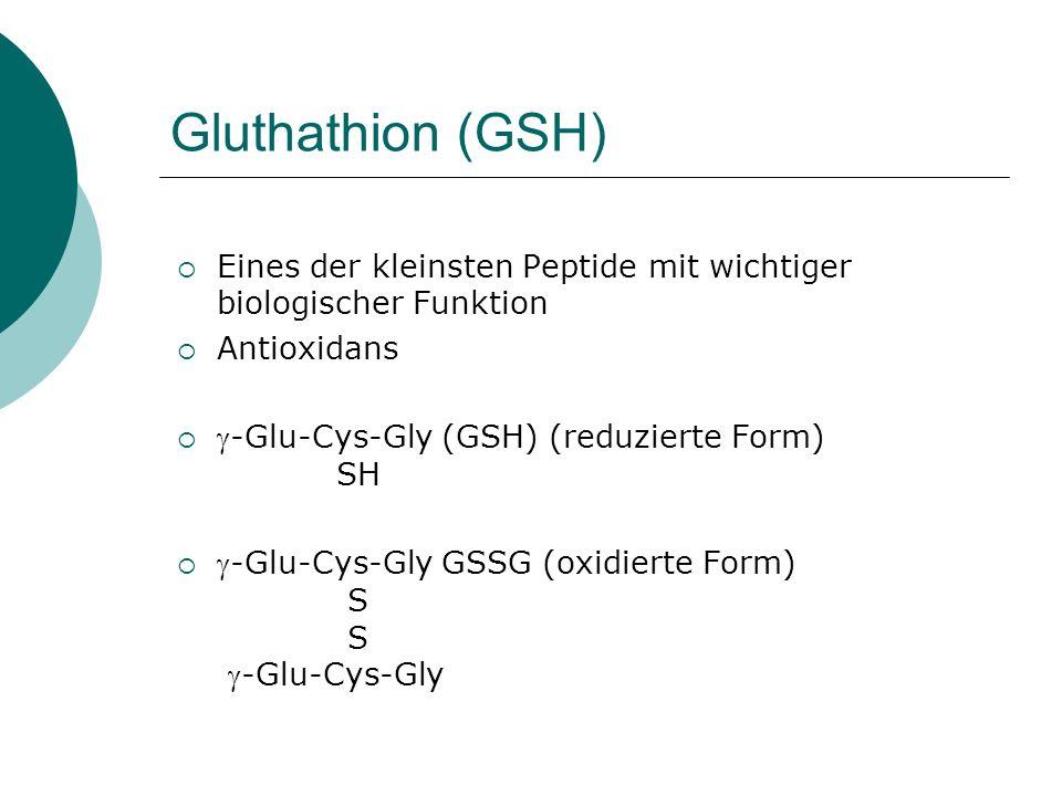 Gluthathion (GSH) Eines der kleinsten Peptide mit wichtiger biologischer Funktion. Antioxidans. -Glu-Cys-Gly (GSH) (reduzierte Form) SH.