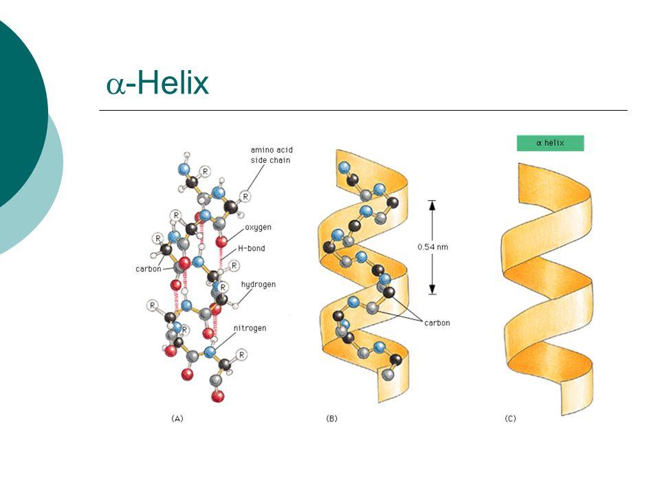 a-Helix
