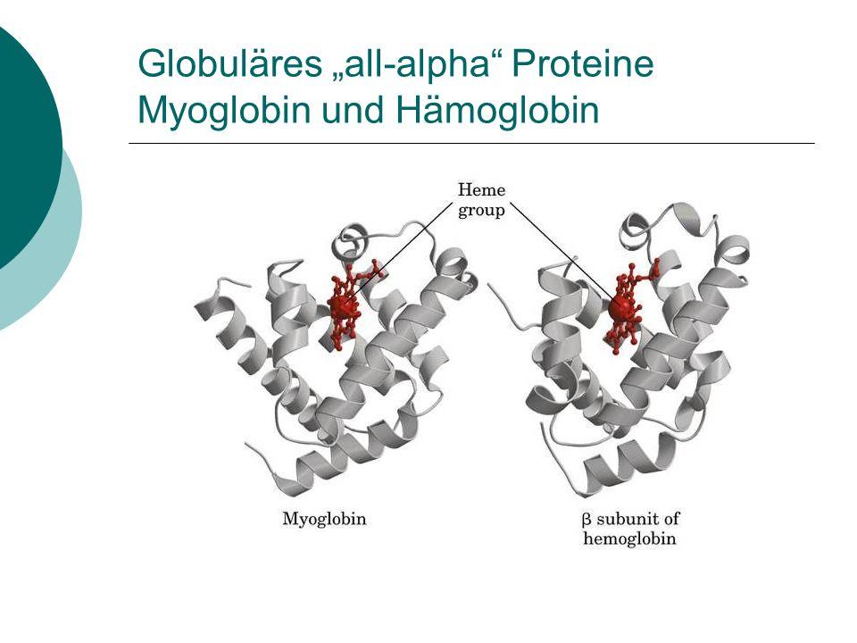 """Globuläres """"all-alpha Proteine Myoglobin und Hämoglobin"""