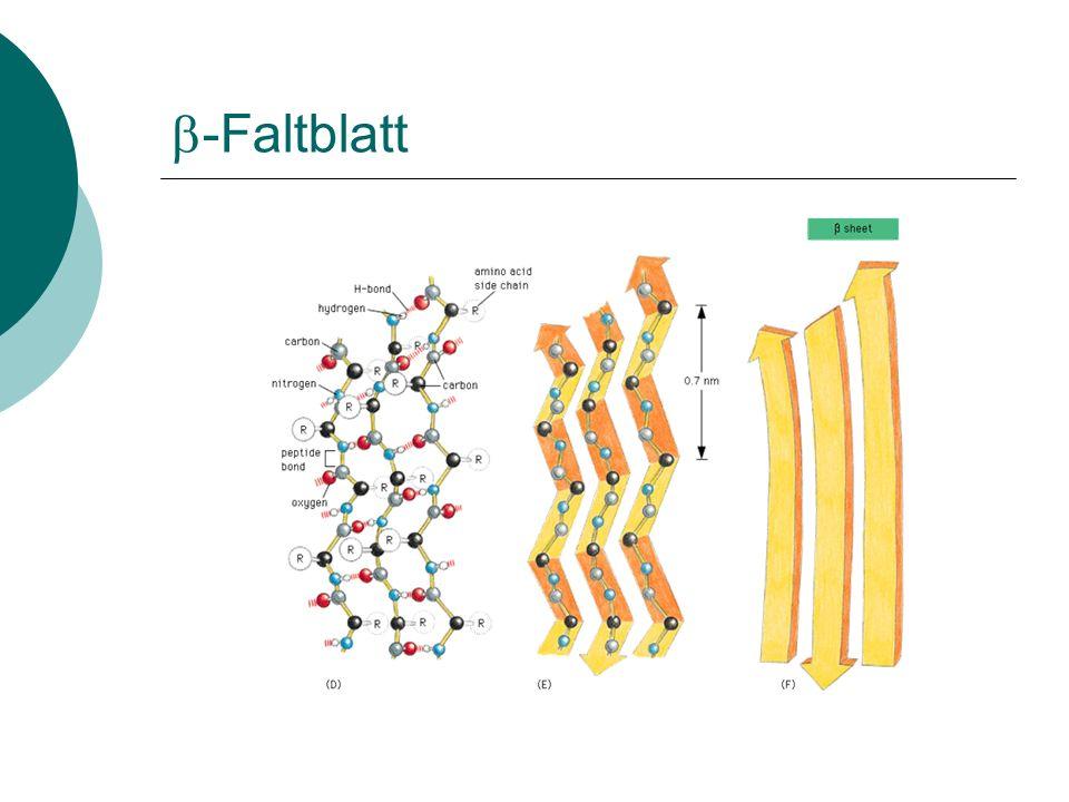 b-Faltblatt