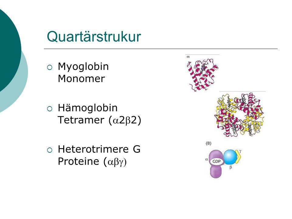 Quartärstrukur Myoglobin Monomer Hämoglobin Tetramer (a2b2)
