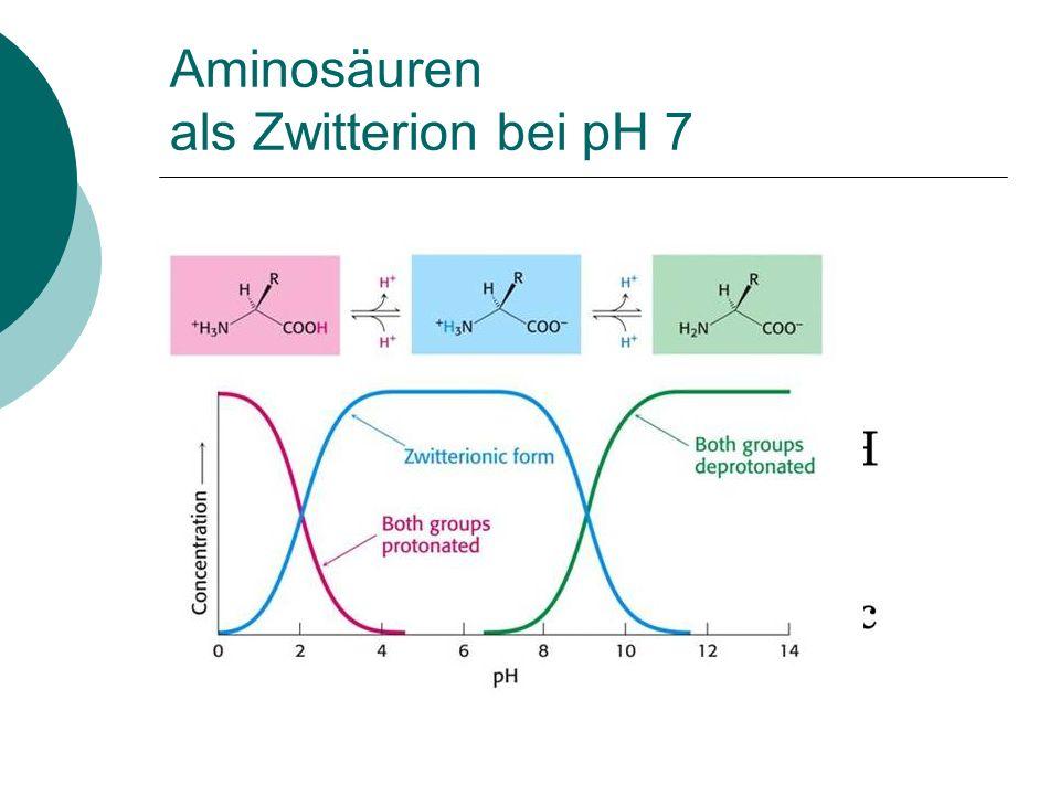 Aminosäuren als Zwitterion bei pH 7