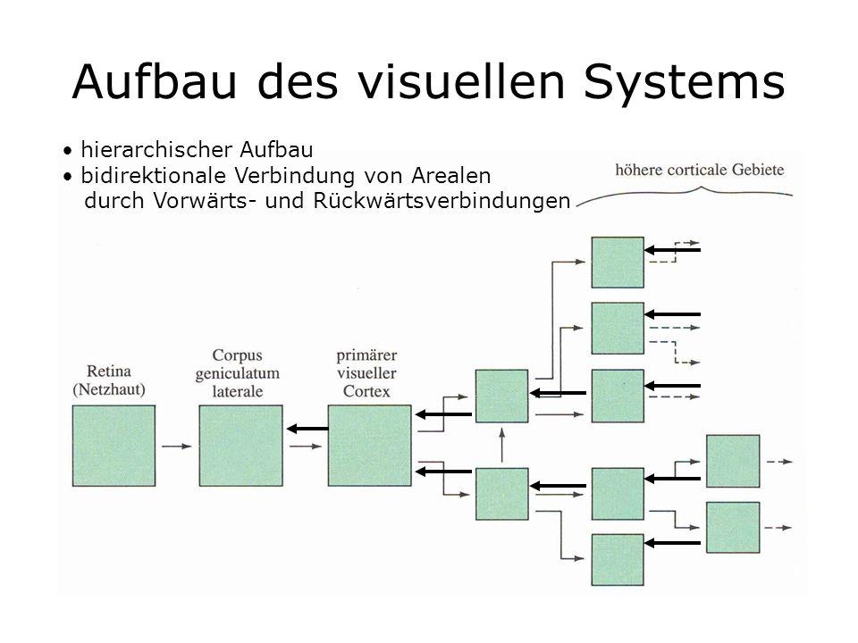 Aufbau des visuellen Systems