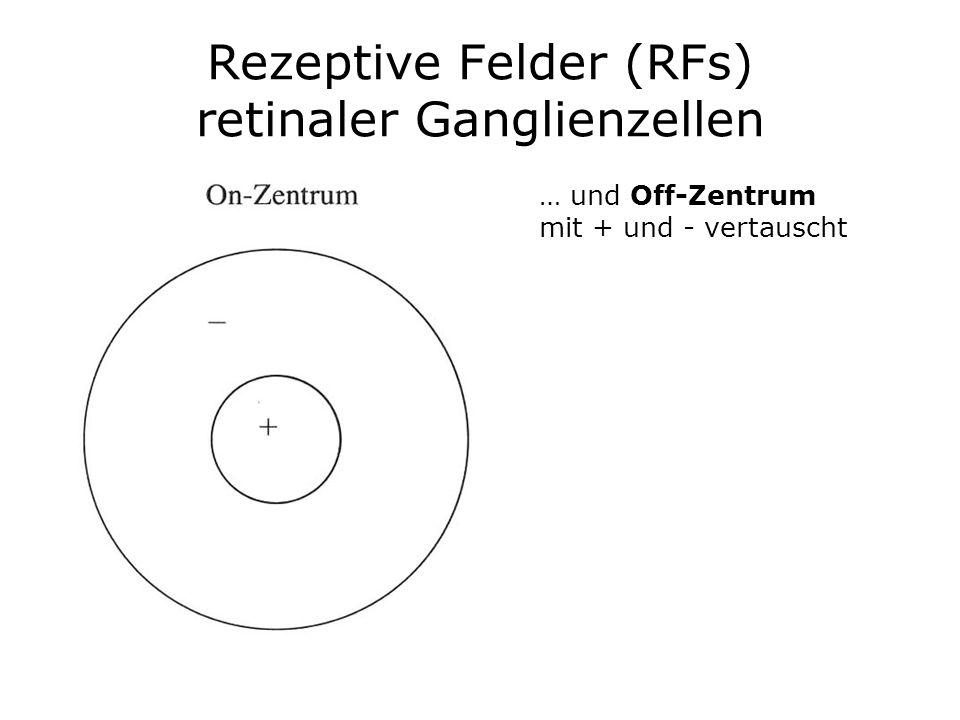 Rezeptive Felder (RFs) retinaler Ganglienzellen