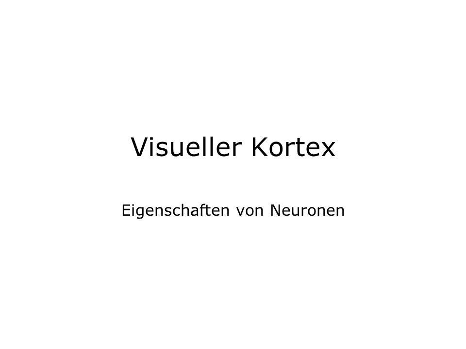 Eigenschaften von Neuronen