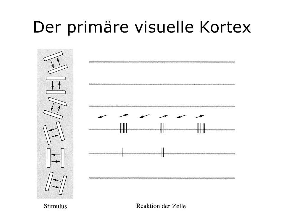 Der primäre visuelle Kortex