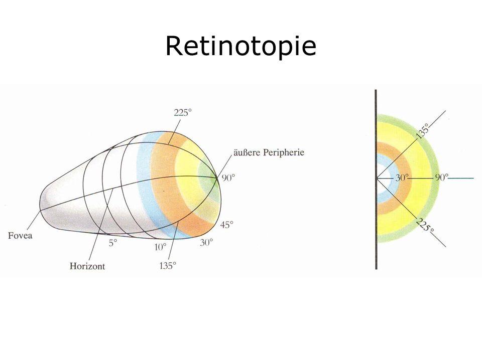Retinotopie