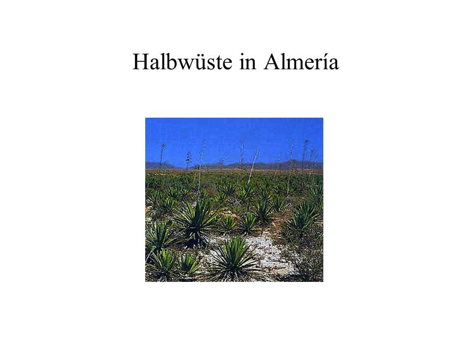 Halbwüste in Almería