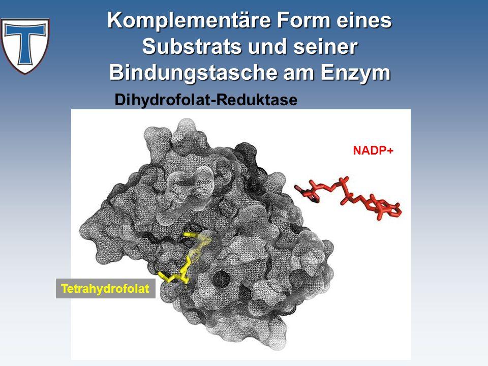 Komplementäre Form eines Substrats und seiner Bindungstasche am Enzym