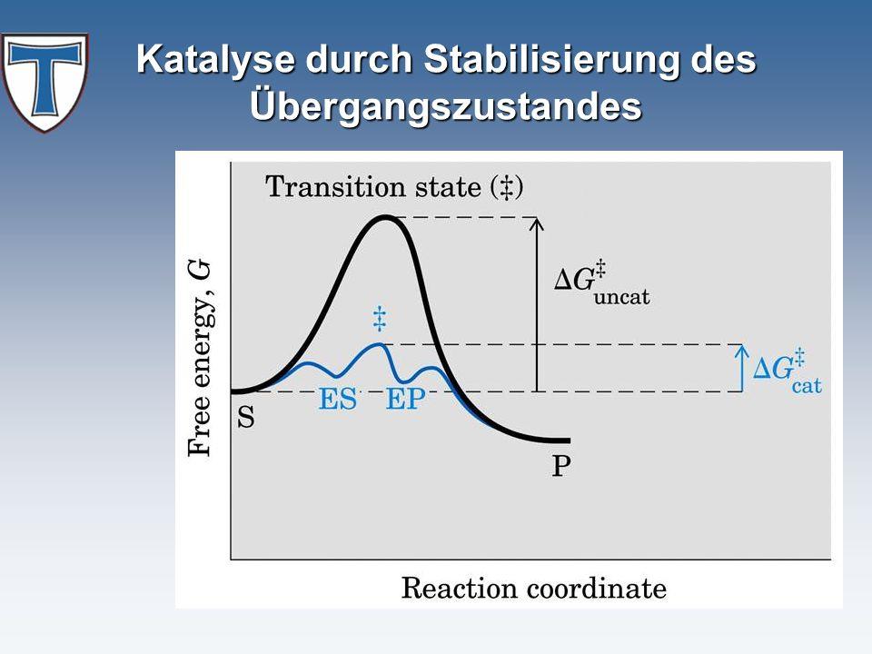 Katalyse durch Stabilisierung des Übergangszustandes