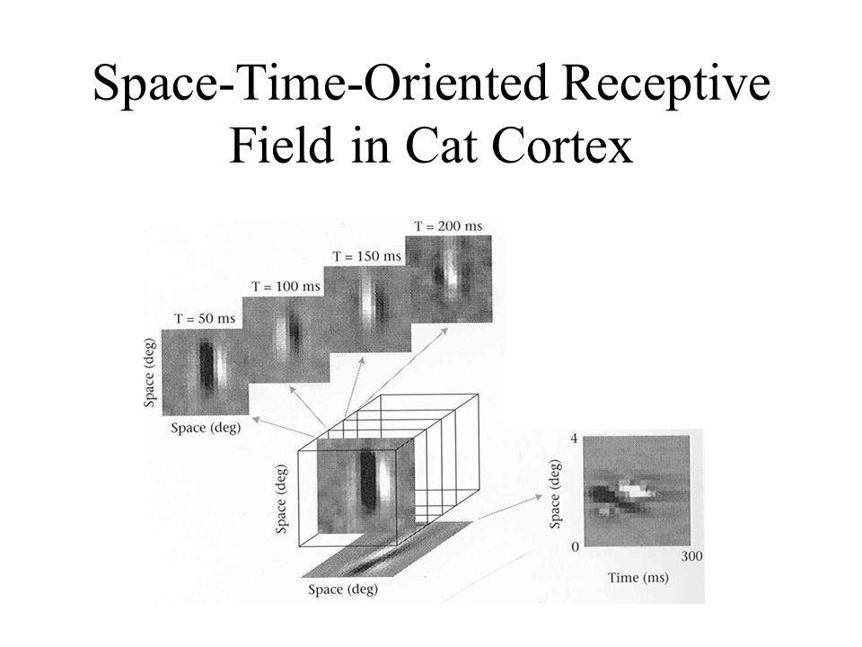 Space-Time-Oriented Receptive Field in Cat Cortex