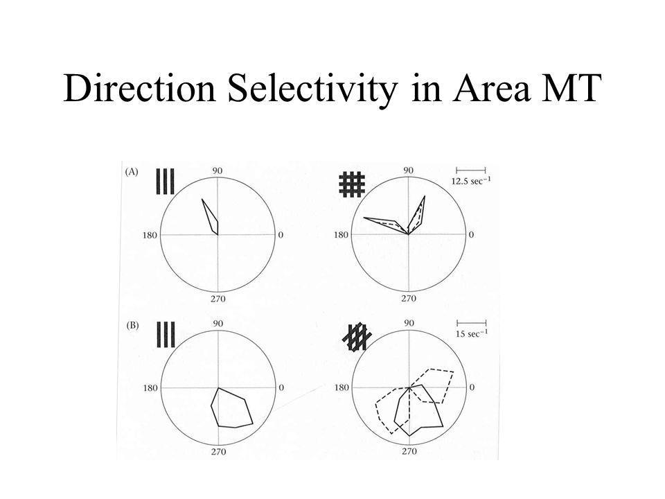 Direction Selectivity in Area MT