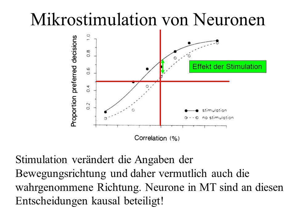 Mikrostimulation von Neuronen