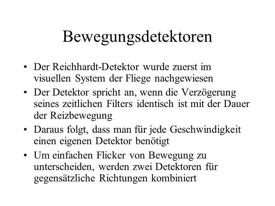 BewegungsdetektorenDer Reichhardt-Detektor wurde zuerst im visuellen System der Fliege nachgewiesen.
