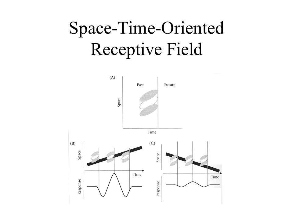 Space-Time-Oriented Receptive Field
