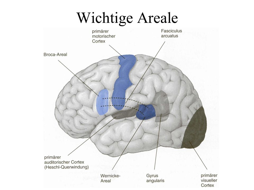 Wichtige Areale