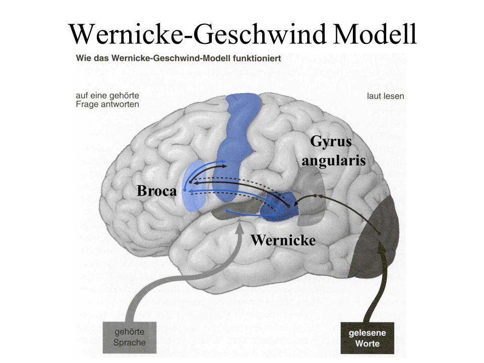 Wernicke-Geschwind Modell