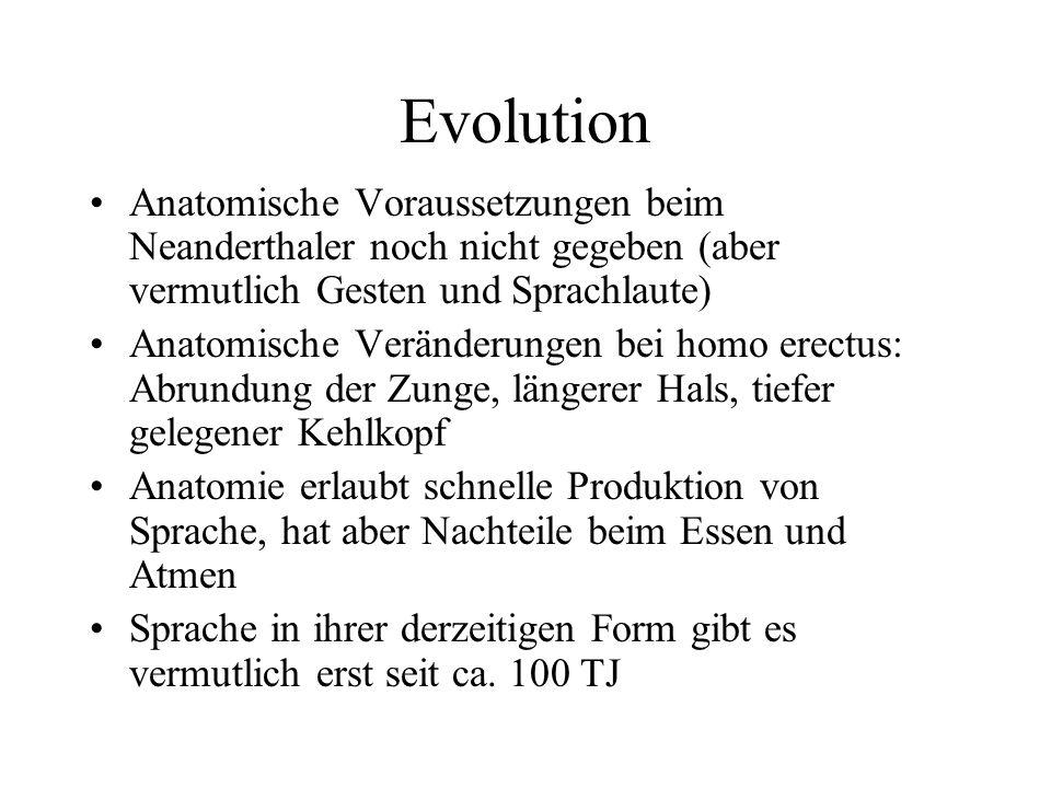 Evolution Anatomische Voraussetzungen beim Neanderthaler noch nicht gegeben (aber vermutlich Gesten und Sprachlaute)