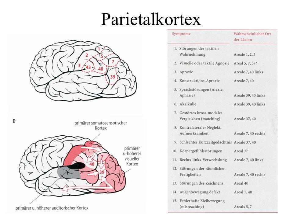 Parietalkortex