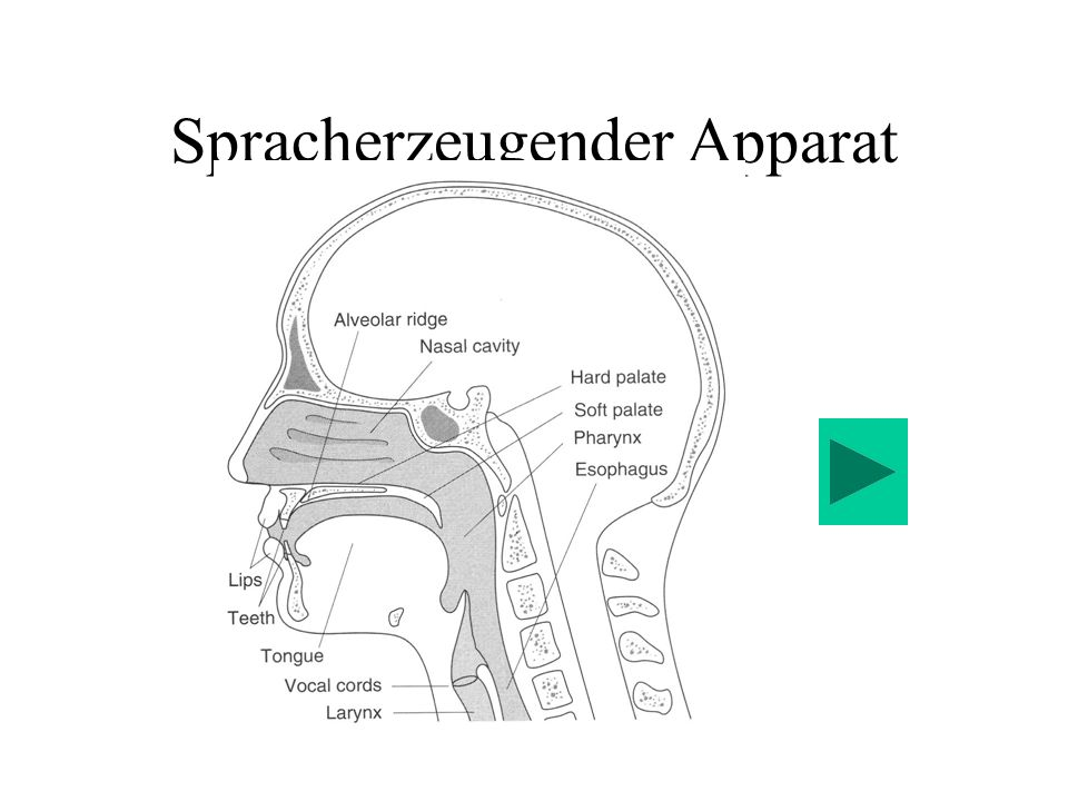 Spracherzeugender Apparat