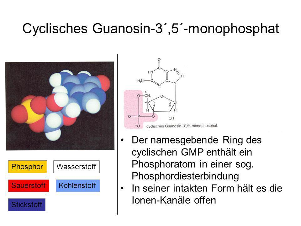 Cyclisches Guanosin-3´,5´-monophosphat