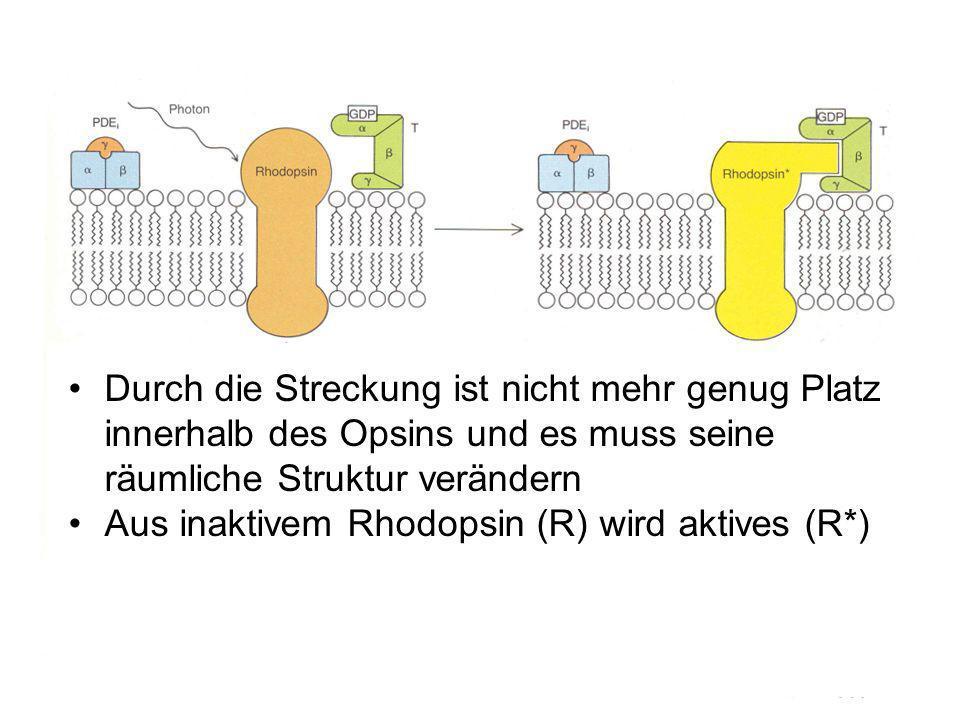 Durch die Streckung ist nicht mehr genug Platz innerhalb des Opsins und es muss seine räumliche Struktur verändern
