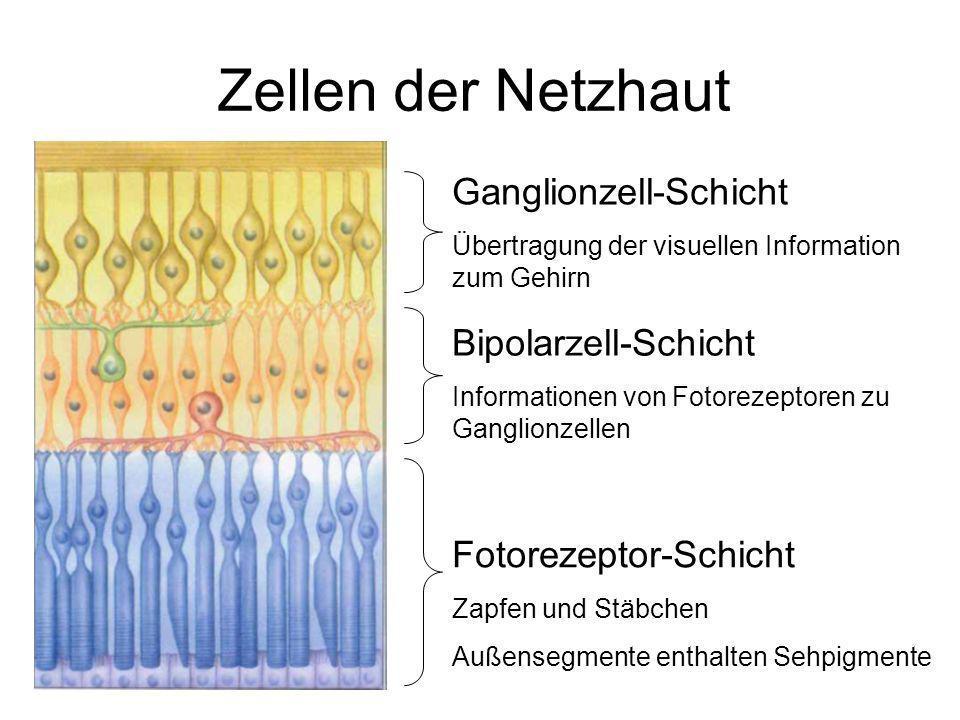 Zellen der Netzhaut Ganglionzell-Schicht Bipolarzell-Schicht